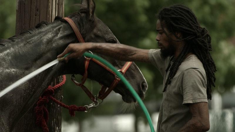 A rider hoses down a horse.