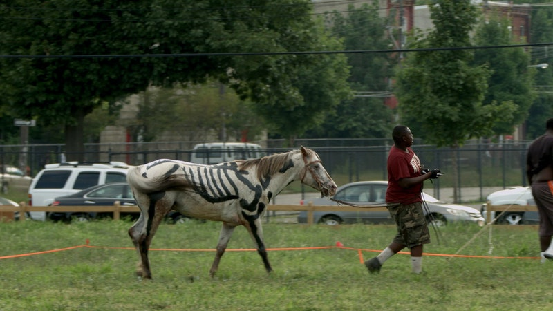 At the Horse Day event, a man leads a horse painted to resemble a skeleton.