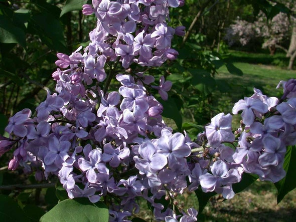 <p>Lilac Collection</p>