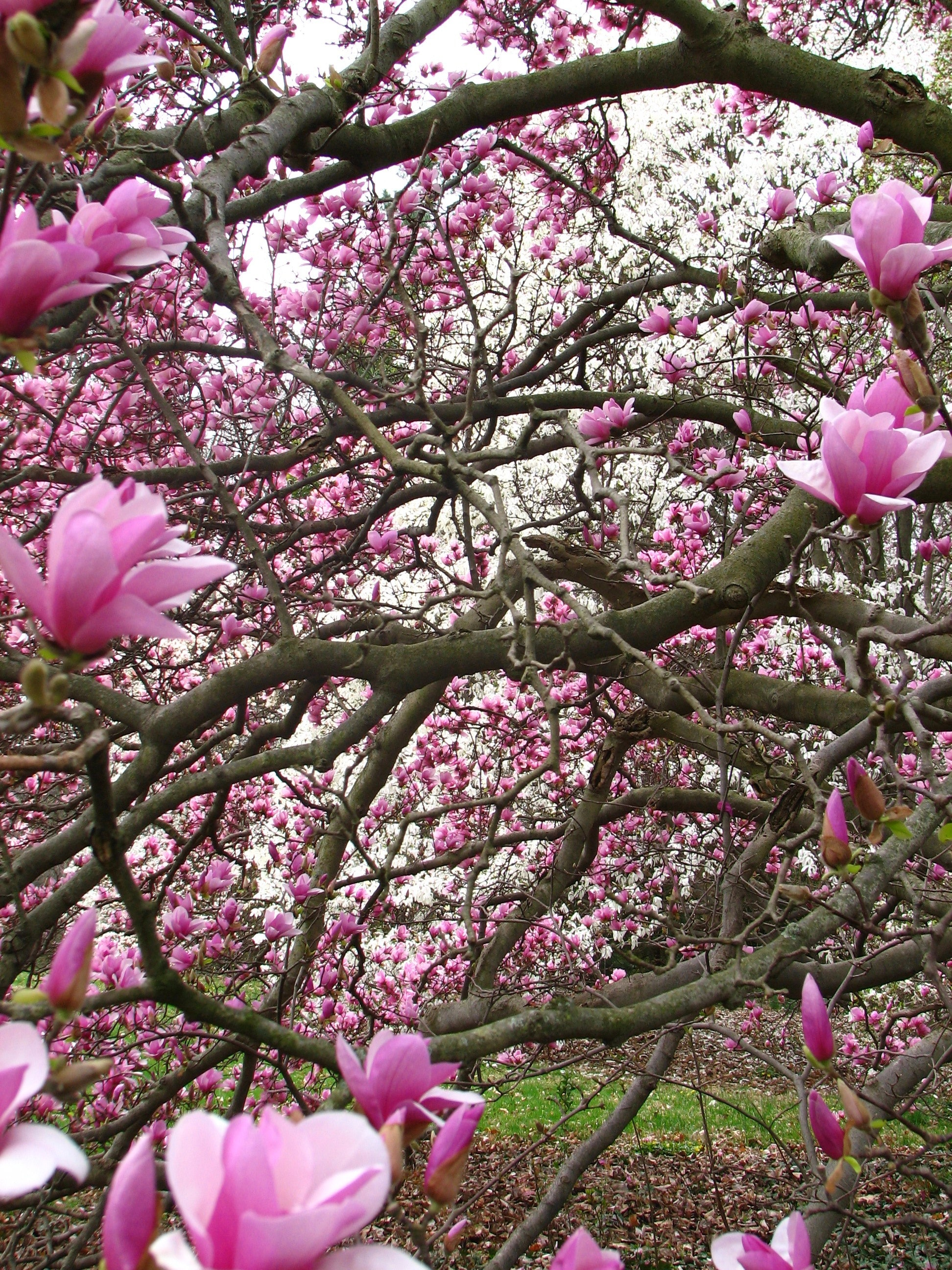 <p>Magnolia Collection</p>