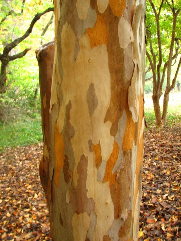 Rare Trees