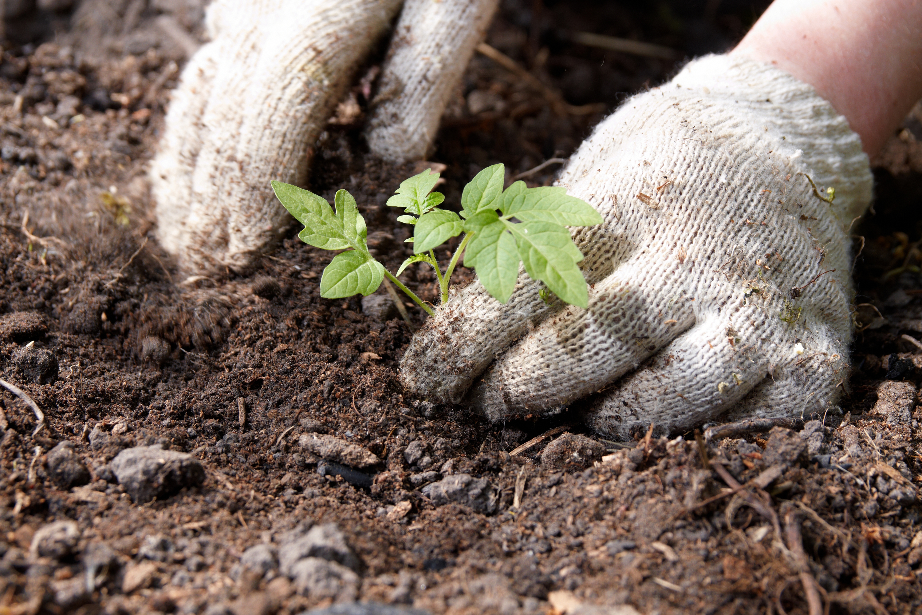 Barnes Foundation ABCs and XYZs of Garden Soil