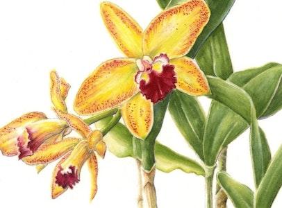 Contemporary Botanical Illustration