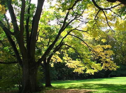 They Might (or Might Not) Be Giants: Champion Trees of the Barnes Arboretum