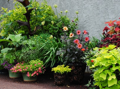 Artfully Planted Containers
