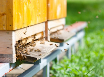So You Want to Keep Honeybees . . .