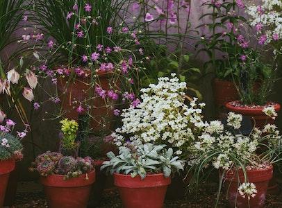 Your Small-Space Garden